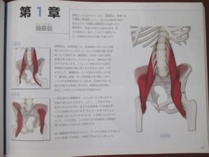 大腰筋腸骨筋