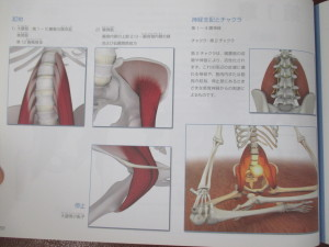 大腰筋腸腰筋
